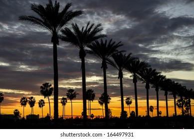 Palm trees on Gene Autry Way at dusk in the City of Anaheim, CA.