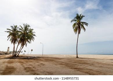 Palm trees on Hafa beach at Salalah, Sultanate of Oman.