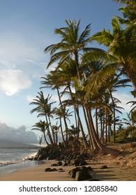 Palm Trees on a Hawaiian Beach