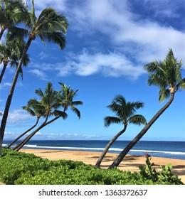 Palm Trees on Kaanapali Beach Maui Hawaii