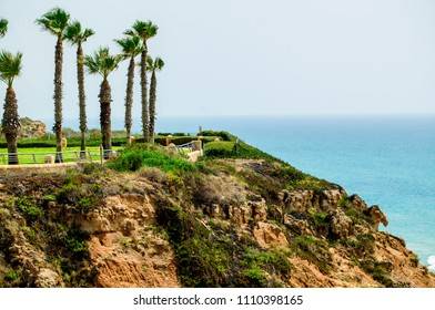 palm trees on the Mediterranean coast in Israel city of Netanya
