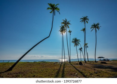 Palm trees on the ocean coast. Hot day, blue sky. Holiday vacation beach background in Marang, Terengganu, Malaysia.