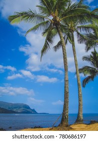 Palm Trees on Puu Poa Beach with ocean and mountains in the background on a sunny day with blue sky and clouds, Princeville, Kauai, Hawaii