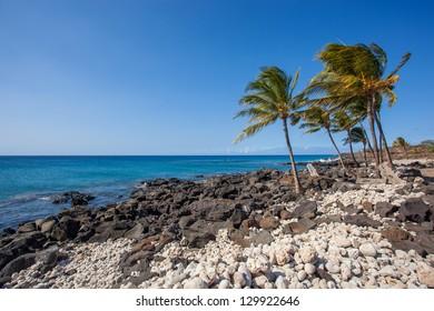 Palm trees on rocky Hawaiian beach