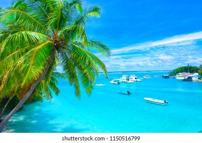 Palm trees on the sandy beach and turquoise ocean from above