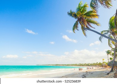Palm trees on a sandy beach. Coast of Atlantic ocean, Dominican Republic, Punta Cana resort