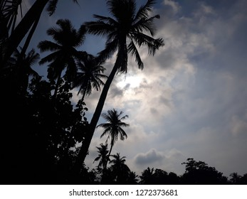 Palm trees on sandy tropical beaches of Thailand