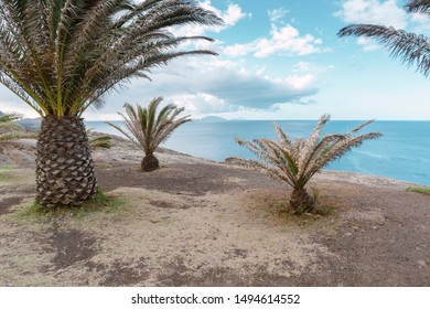 palm trees on the sea shore of Madeira Island