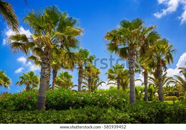 Palm trees on the seaside, Crete, Greece.