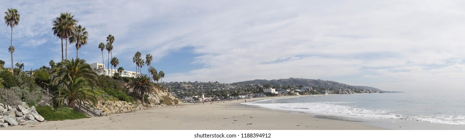 Palm trees on the shore at Laguna Beach, California