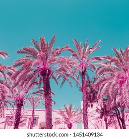 Palm trees on sky background in infrared style. Tropical travel concept. Minimalism and surreal. Soft light pink colors