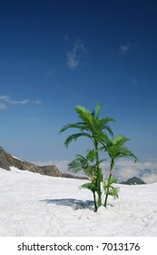 Palm trees on snow high in mountains above the clouds.
