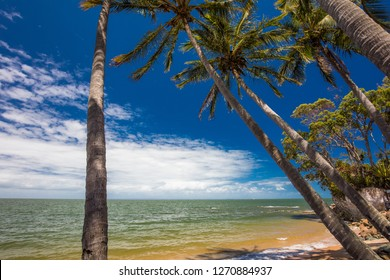 Palm trees on the south end of Suttons Beach, Redcliffe, Brisbane, Queensland, Australia