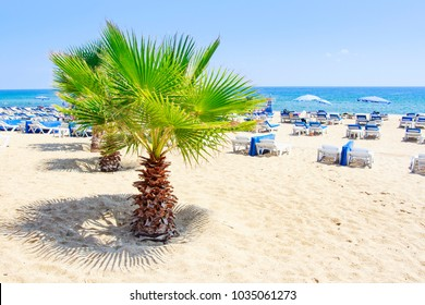 Palm trees on summer sea beach in Alanya on clear sunny summer day. White sand on relax resort beach in Turkey rest. Summer vacation on tropical beach