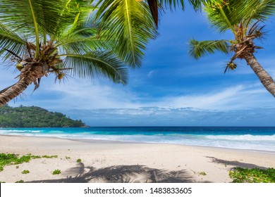 Palm trees on Sunny beach and turquoise sea in Seychelles. Summer vacation and tropical beach concept.