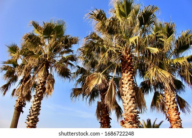 The Palm Trees on a Sunny Day in Jeju Island, South Korea