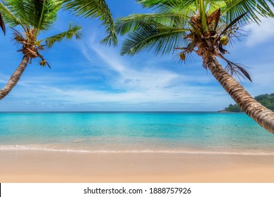 Palm trees on Sunny tropical beach in Caribbean island.  Summer vacation and tropical beach background concept.