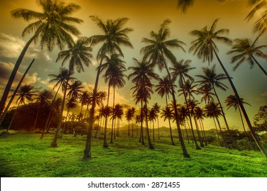 Palm Trees on Sunset