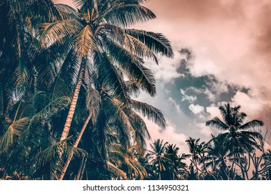 Palm trees on sunset, grunge style photo of a many fresh palm trees on cloudy overcast sky background, beautiful nature of tropical island, Bali