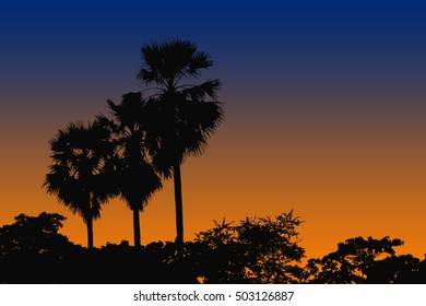 palm trees on sunset sky,silhouette