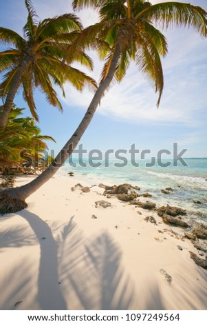 palm trees on the suwarrow atoll, cook Islands,Pacific Ocean