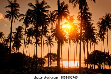 Palm trees on tropical beach with colourful sunset sky in  Thailand