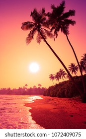 Palm trees on tropical beach at colorful pink tropic sunset