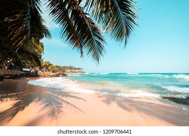 Palm trees on a tropical beach in Sri Lanka.