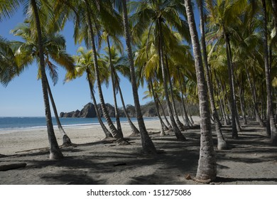Palm trees on the tropical beach in Costa Rica, Central America