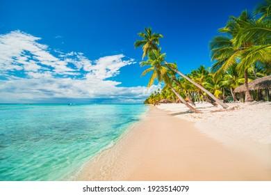 Palm trees on the tropical beach, Dominican Republic, Punta Cana, Saona Island