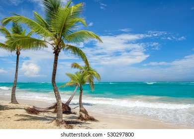 Palm trees on a tropical beach in Punta Cana, Dominican Republic