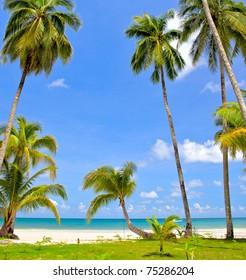 Palm trees on tropical beach under blue sky
