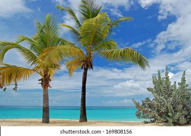 Palm trees on tropical Grand Anse beach on Grenada Island