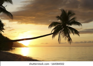 Palm trees on tropical paradise island beach at sunset