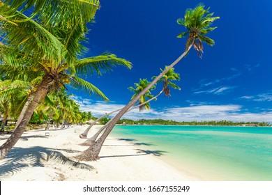 Palm trees on a white sandy beach at Plantation Island, Fiji, South Pacific.