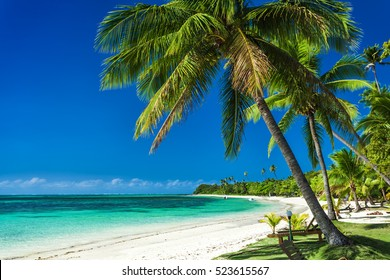 Palm trees on a white sandy beach at Plantation Island, Fiji, South Pacific