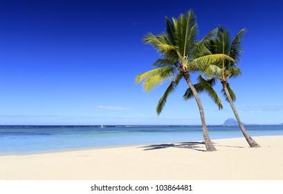 Palm trees on white sans paradise beach
