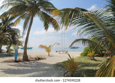 Palm Trees Open to a Beach with Cruise Ships on a Sunny Day