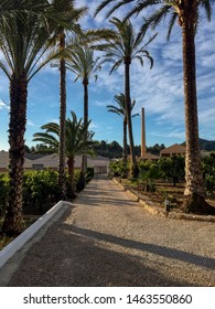 Palm trees and orange trees in a park in Oliva, Valencia province, Valencian Community, Spain