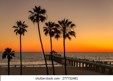 Palm trees over the Manhattan Beach and Pier on sunset in Southern California in Los Angeles.