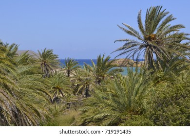 Palm trees over the sea