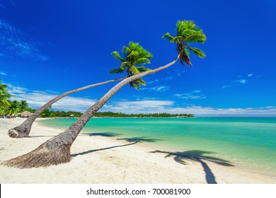 Palm trees over white beach on a a Plantation Island, Fiji, South Pacific