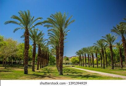 palm trees park outdoor city square ecological green space for walking and promenade, bright colors and summer hot season weather time