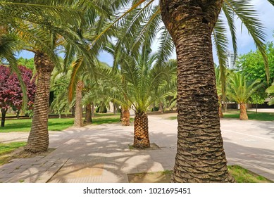 Palm trees in park in Valencia