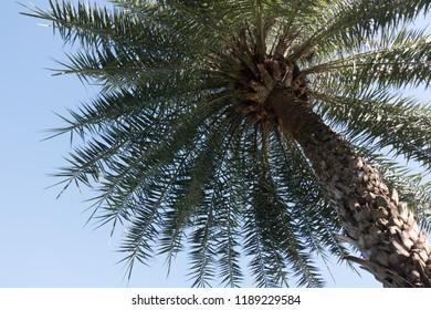 Palm Trees - Perfect palm trees a beautiful blue sky