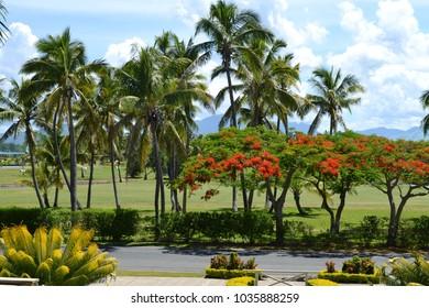 Palm trees and Poinciana blossom at tropical Denarau golf course, Viti Levu Fiji.