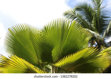 Palm trees at Praslin Island, Seychelles.