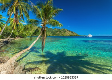 Palm Trees and quiet bay at Moorea in Tahiti, French Polynesia