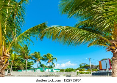 Palm trees in Raisins Clairs beach in Guadeloupe, French west indies. Lesser Antilles, Caribbean sea