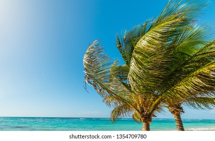 Palm trees in Raisins Clairs shore in Guadeloupe, French west indies. Lesser Antilles, Caribbean sea